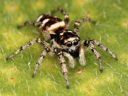 معلومات رائعة عن العناكب spiders