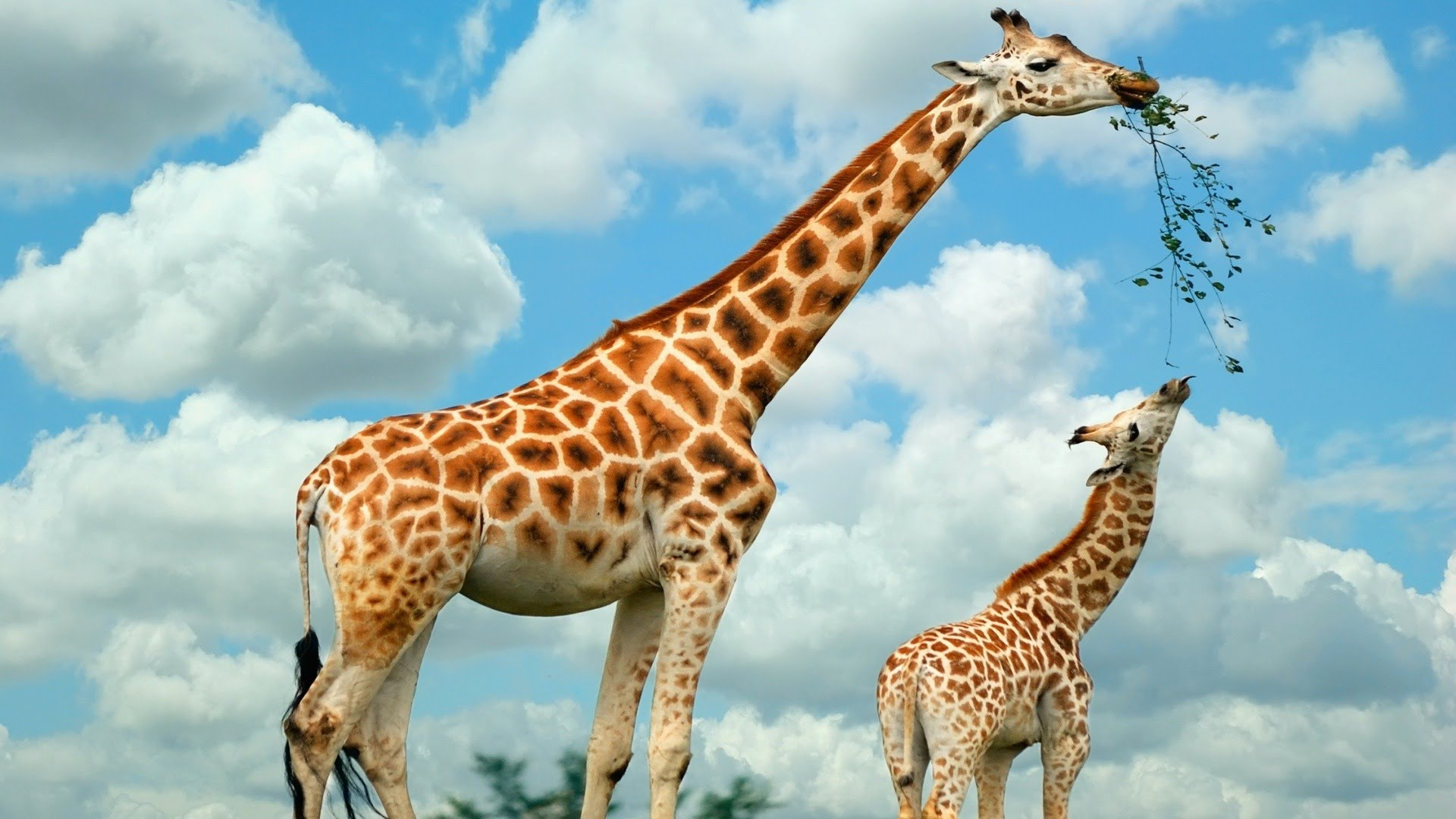 النسبة بين الأم ووليدها فى عالم الحيوان