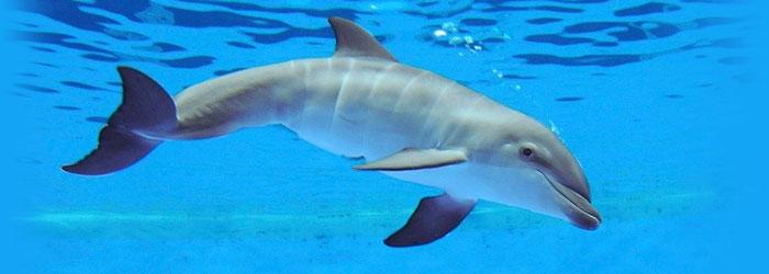 معلومات رائعة عن الدلافين