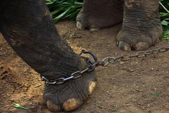 قصة الفيل والكرة الخشبية