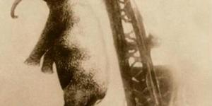 اول حيوان يعدم شنقاً في التاريخ