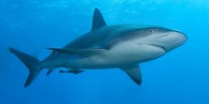 حقائق مذهلة عن سمك القرش