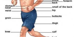 أجزاء الجسم بالإنجيزية The parts of the human body
