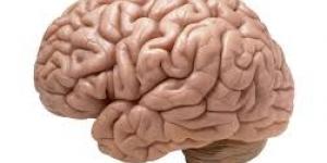 ما لا تعرفه عن مخ الإنسان