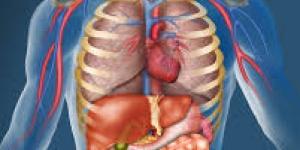 أسرار جسم الإنسان the human body