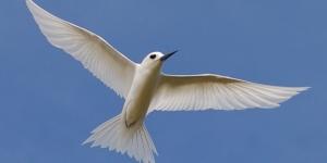 طائر الخرشنه الرائع