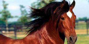 أسرار الخيول