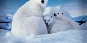 القطب الشمالى والتنقيب عن النفط