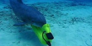 إستخدام الدلافين فى العمليات العسكرية