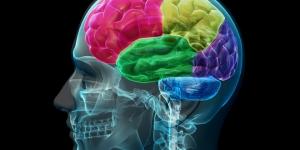 معلومات هامة عن الدماغ