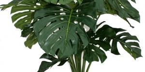 نبات القفص الصدرى