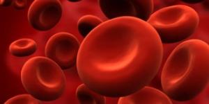 تكوين دم الإنسان