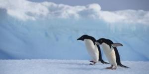 معلومات عن القطب الجنوبى