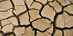 كيف تحيا التربة بعد جفافها
