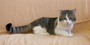 علامات الحمل عند القطط المنزلية تعرف عليها