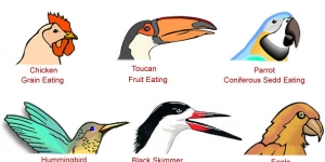 أنواع مناقير الطيور سبحان الله