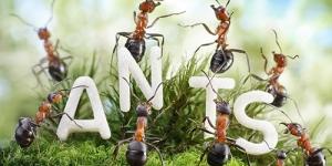 معلومة عجيبة عن النمل