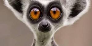 معلومات غريبة عن عالم الحيوان المدهش