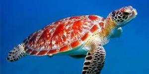 السلاحف البحرية المدهشة تعرف عليها