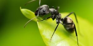 النملة تستحق دخول الموسوعة