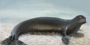 تعرف على الفقمة السباحة الماهرة seal
