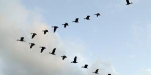 هجرة الطيور على شكل رقم 7