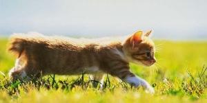 ماذا يحدث إذا اختفت القطط من الطبيعة