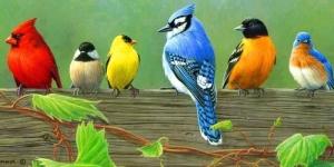اسباب تغريد الطيور