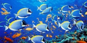 اعجاز الله فى خلق السمك