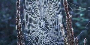 شبكة العنكبوت العجيبة