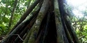 الشجرة المتحركة