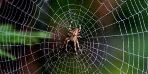 معجزة العنكبوت فى القرأن