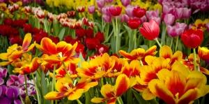 انواع الزهور بالانجليزية