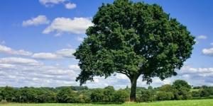 مفردات عن الاشجار بالانجليزية