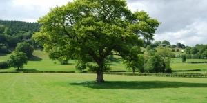 انواع الاشجار باللغة الانجليزية