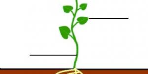 اجزاء النبات باللغة الانجليزية