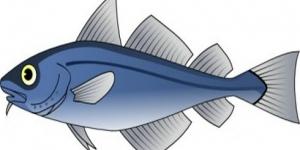 اجزاء السمكة باللغة الانجليزية