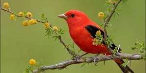 اسماء الطيور بالانجليزية