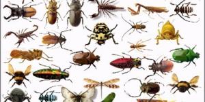 اسماء الحشرات باللغة الانجليزية