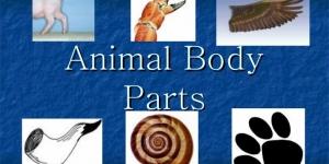 اجزاء الحيوان باللغة الانجليزية