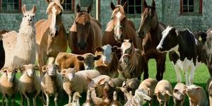 اسماء حيوانات المزرعة باللغة الانجليزية