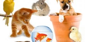 اسماء الحيوانات الاليفة باللغة الانجليزية