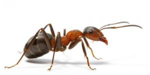 طريقة امنة لطرد النمل من البيت
