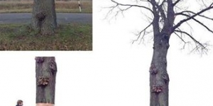 الشجرة السحرية