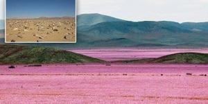 صحراء تتحول لحديقة