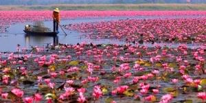 بحيرة الزهور