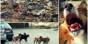الكلاب والزلزال