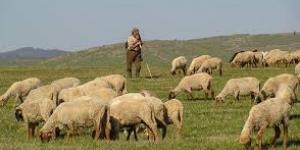 قصة الراعى الصالح وتدبير الله له