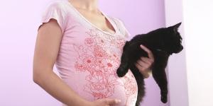 ما هو داء القطط واعراضه