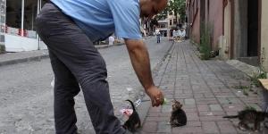 قصة الرجل واطعامة القطط الصغيرة